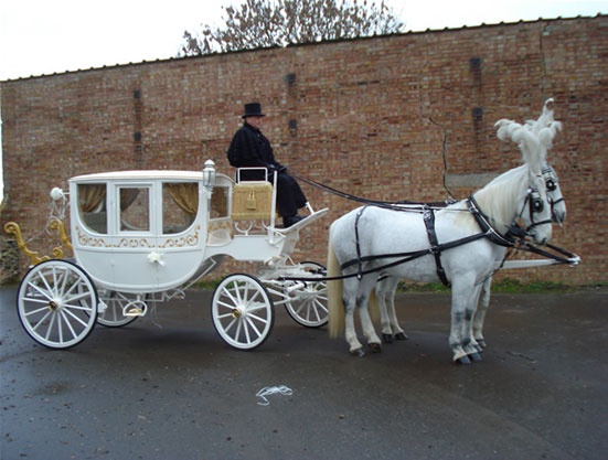 White Horse Carriage Horse And Carriage
